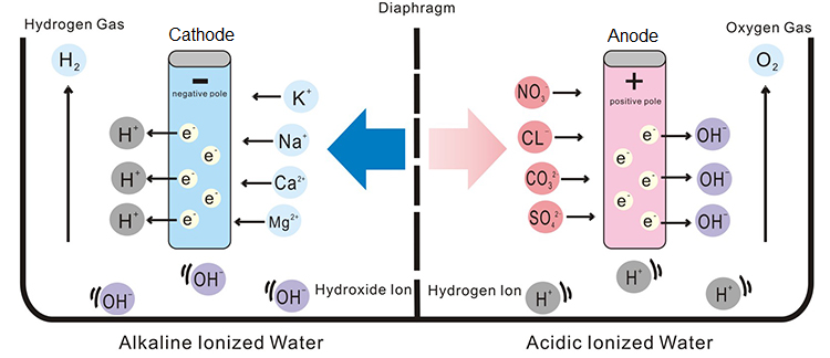 electrolyzed water alkaline ionized water